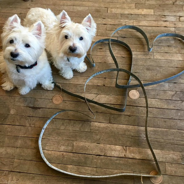 Beautiful West Highland Terriers Westies in sweaters at Trove Vintage! #westies #shopdogs #westhighlandterrier