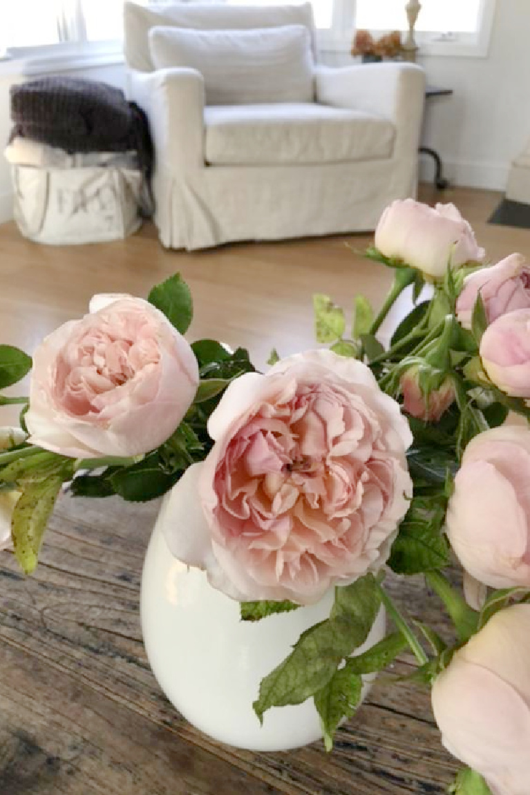 Blush pink Francis Meilland garden roses in my living room - Hello Lovely Studio.