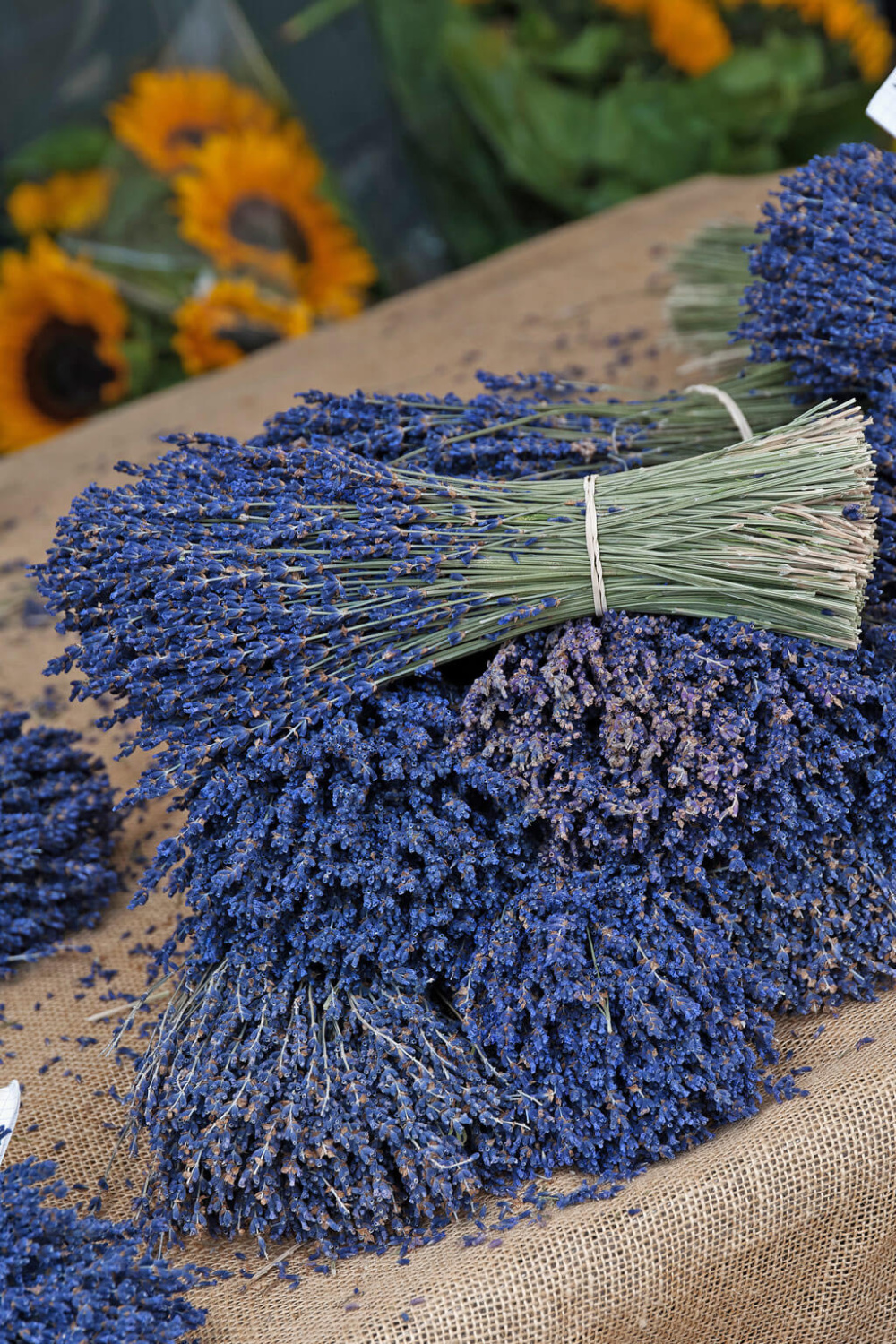 French country lavender.
