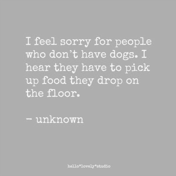 Funny dog quote and pet humor on Hello Lovely Studio. #humorquores #petquote #dogquotes