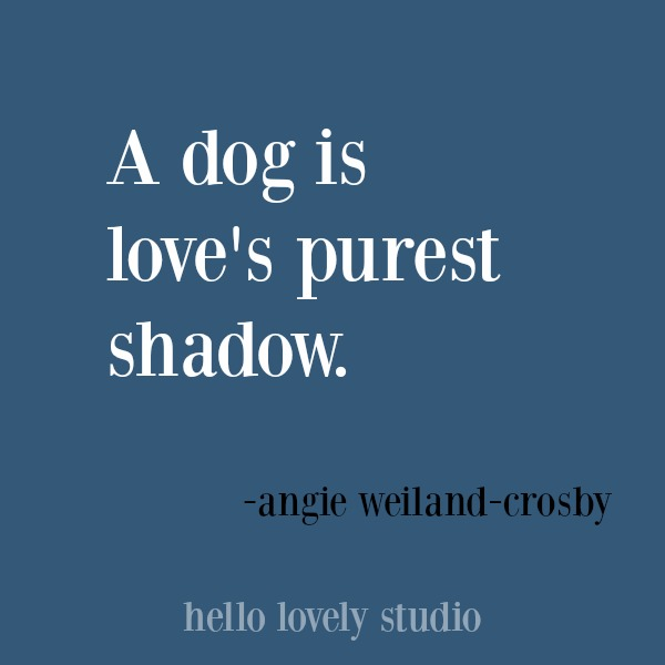 Heartwarming quote about dogs. #hellolovelystudio #dogquote #quotes #dogs