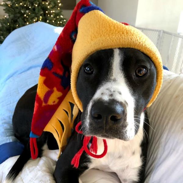 Rescue puppy - Hello Lovely Studio. #mixedbred #dogs #hellolovelystudio #rescuepuppy