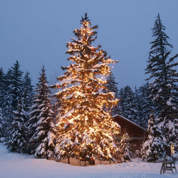 Magnificent evergreen tree decorated for Christmas in mountains - Sundance Catalog. #christmastree #mountainchristmas #naturalchristmastree