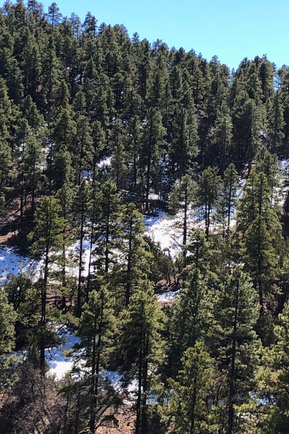 Beautiful evergreen forest with snow on the mountain along Route 179 in Arizona - Hello Lovely Studio.