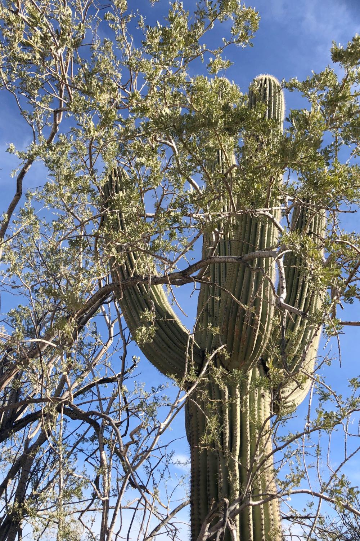 Arizona and Southwest landscape beauty with Saguaro cacti, mountains, and desert plants - Hello Lovely Studio.