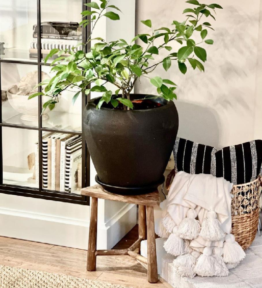 Black pot on a rustic stool with pom pom throw - @seasonalsolutions. #blackandwhite #boho