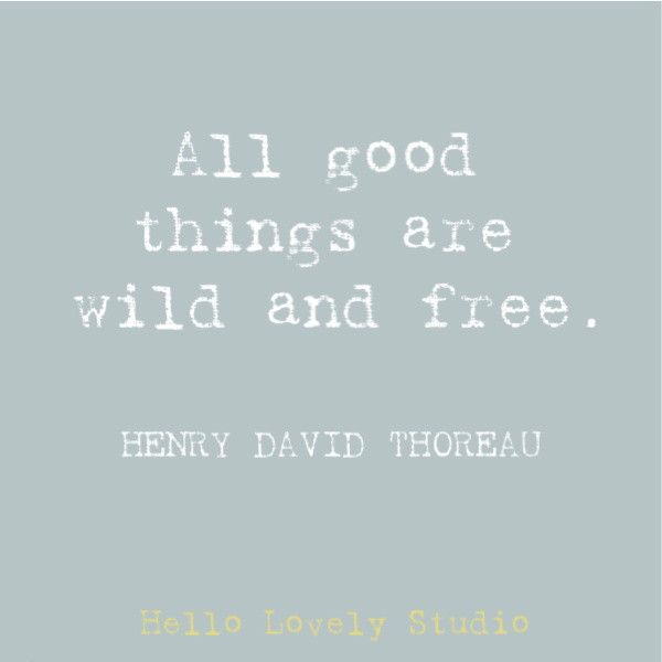 Inspirational quote from Henry David Thoreau: all good things are wild and free. #naturequote #quotes #inspirationalquote #thoreau