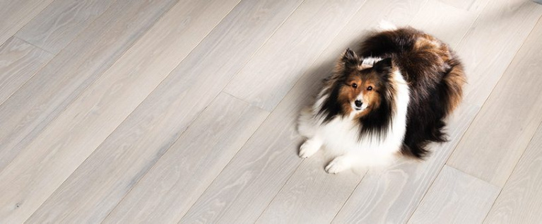Carlisle Wide Plank Floors Celestial Collection - with a sweet collie enjoying the comfort. #carlislehardwoodfloors #flooring #hardwoodfloors #lightwood