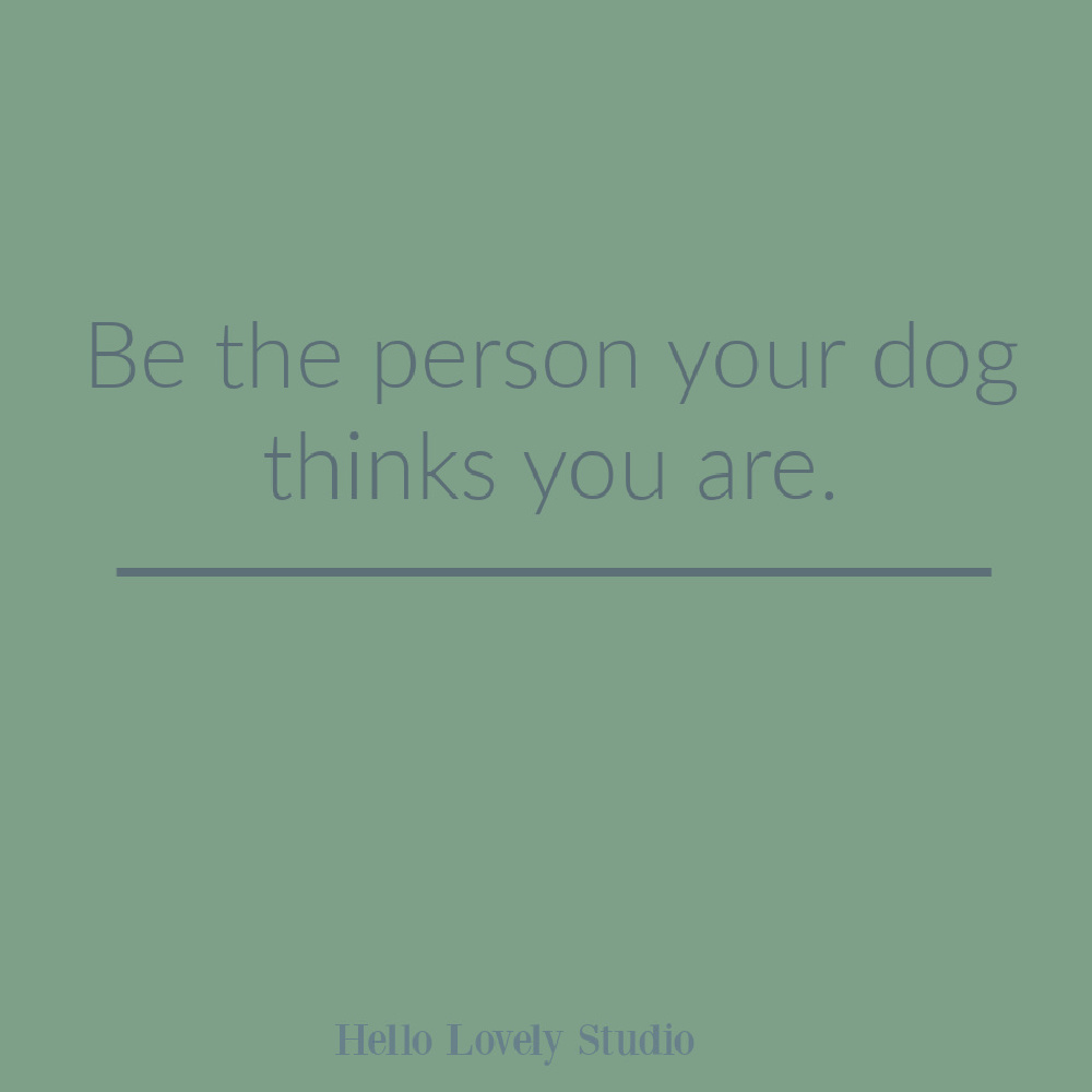 Dog quote on Hello Lovely Studio. #dogquotes #whimsicalquotes
