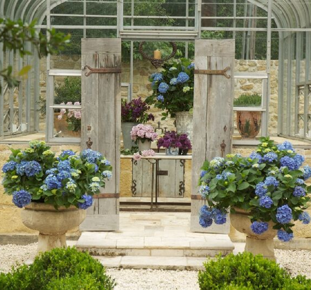 Pots blooming blue and a breathtaking greenhouse sing - Chateau Domingue. #frenchgarden #greenhouse #elegantgarden #conservatory