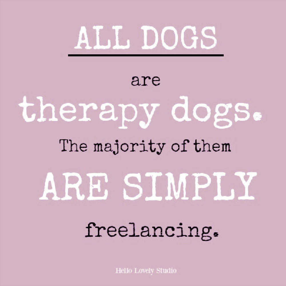 Whimsical dog quote on Hello Lovely. #dogquotes #petquotes #doglovers