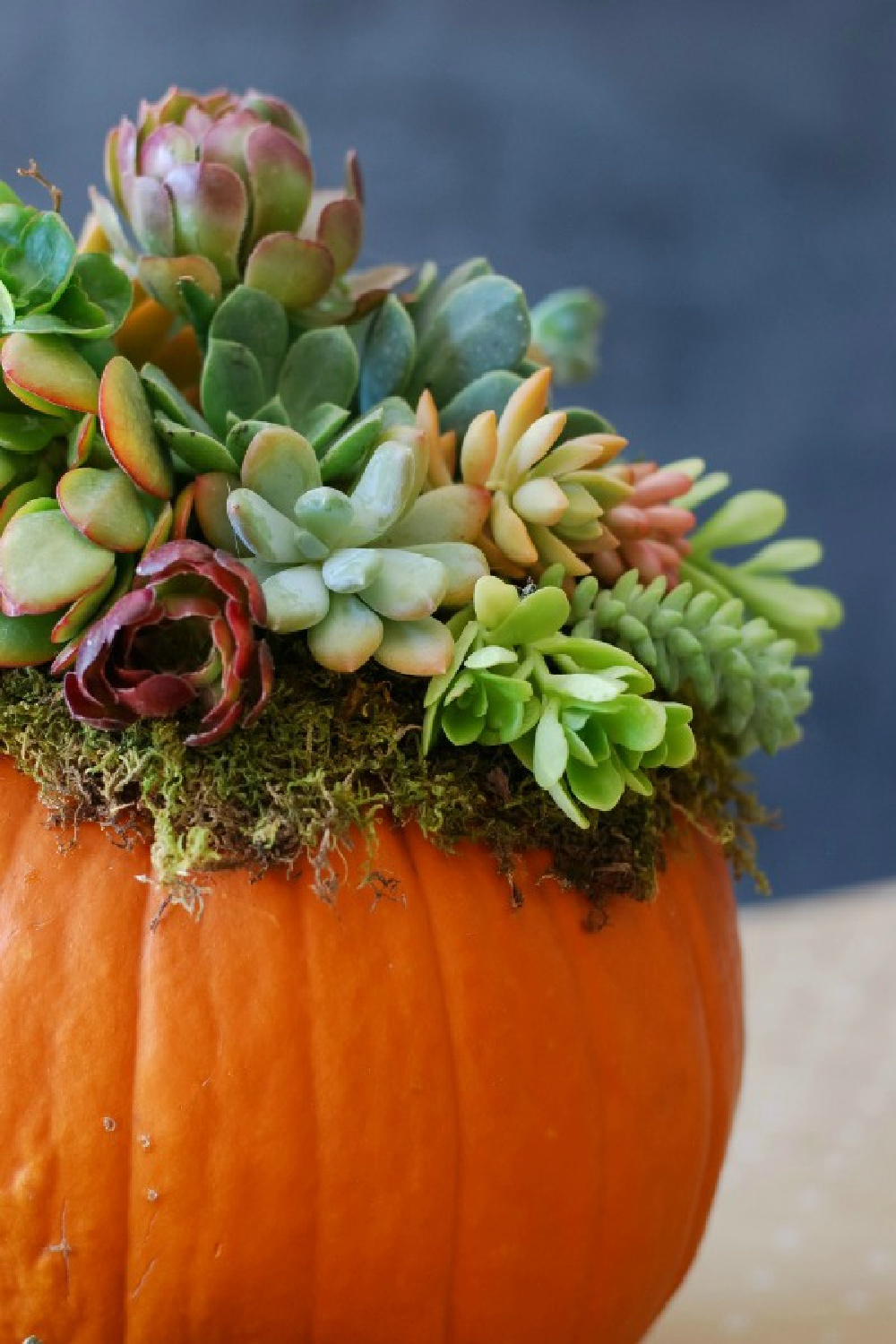Vibrant colorful fall centerpiece for Thanksgiving or everyday! Succulents in a bright orange pumpkin - Simply Happenstance. #falltable #tablescape #centerpiece #tabletop #florals #autumn #pumpkins