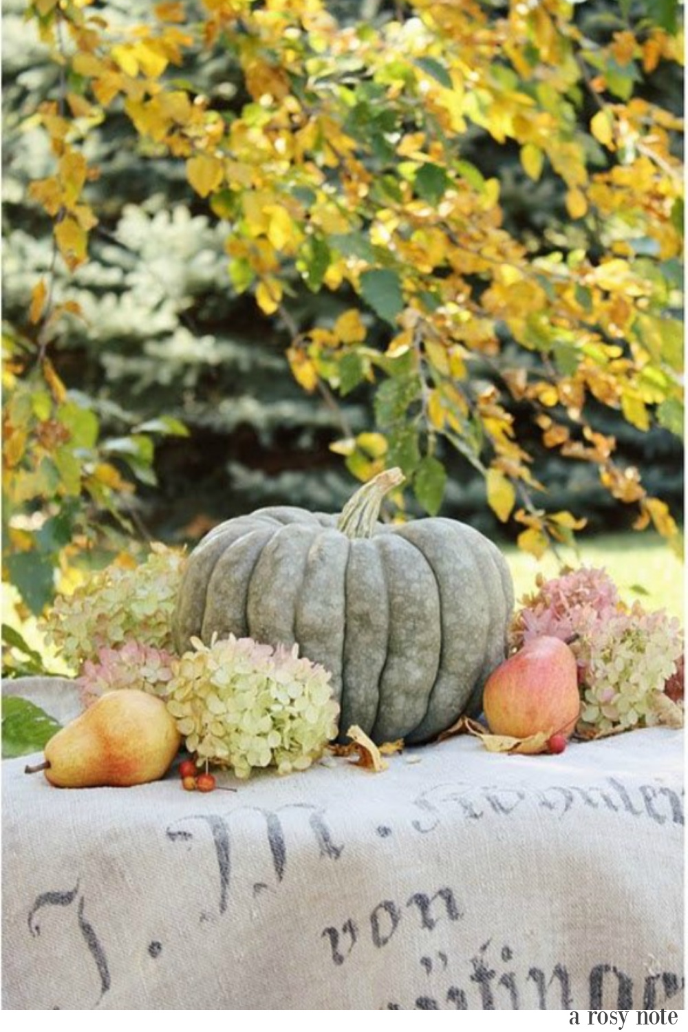 Blue green fall pumpkin with hydrangea and pears on a grainsack amid golden turning leaves - A Rosy Note. Serene French Farmhouse Fall Decor Photos ahead!