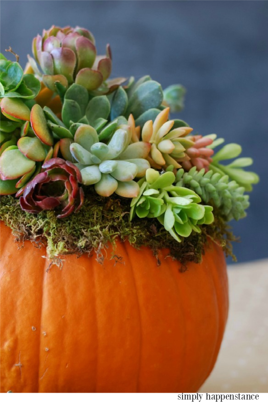 Fall centerpiece with succulents in a pumpkin -Simply Happenstance. Serene French Farmhouse Fall Decor Photos ahead!  #falltable #tablescape #centerpiece #tabletop #florals #autumn #pumpkins