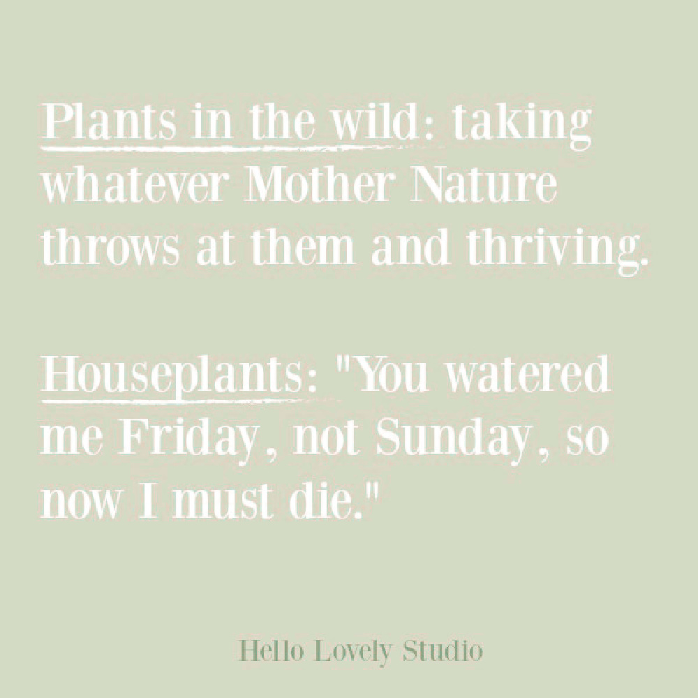 Funny plant quote on Hello Lovely. #humorquotes #funnyquotes #houseplants