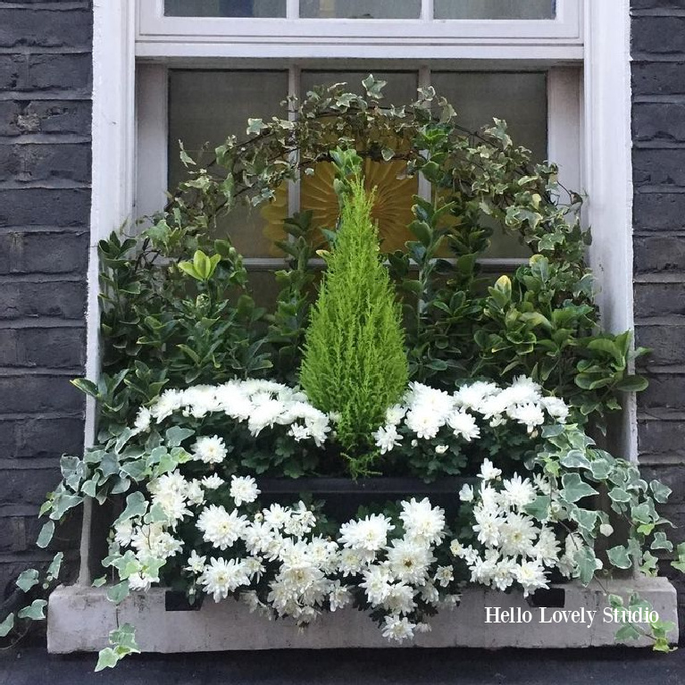 Charming green and white flowers, ivy, and cypress in a London window box - Hello Lovely Studio. #windowbox #flowerbox #christmasdecor #holidaydecor #simplechristmas