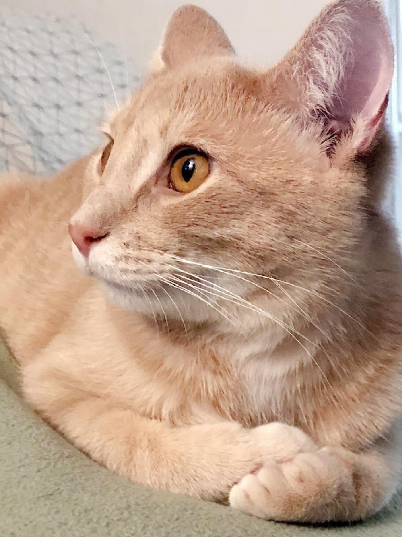 My sweet Pony Boy golden kitty cat - Hello Lovely Studio.