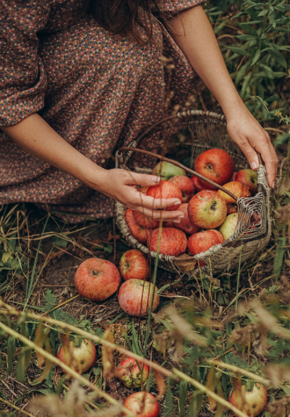 Apple picking in France - FrenchGardenHouse. #fallapples #frenchcountry #frenchfall