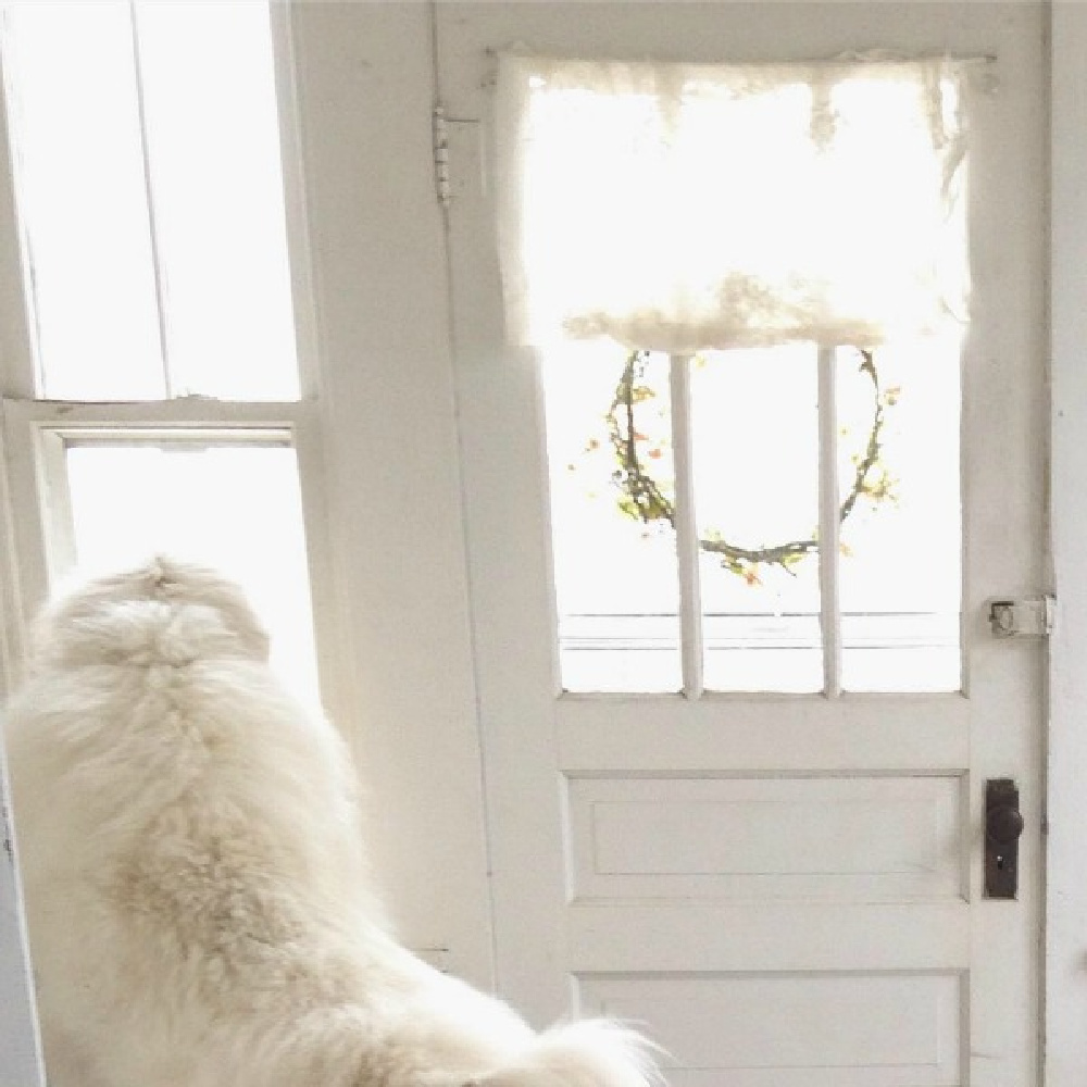 Great Pyrenees gazing out window of beautiful vintage white Nordic French cottage by My Petite Maison. #swedishchristmas #scandistyle #frenchnordic