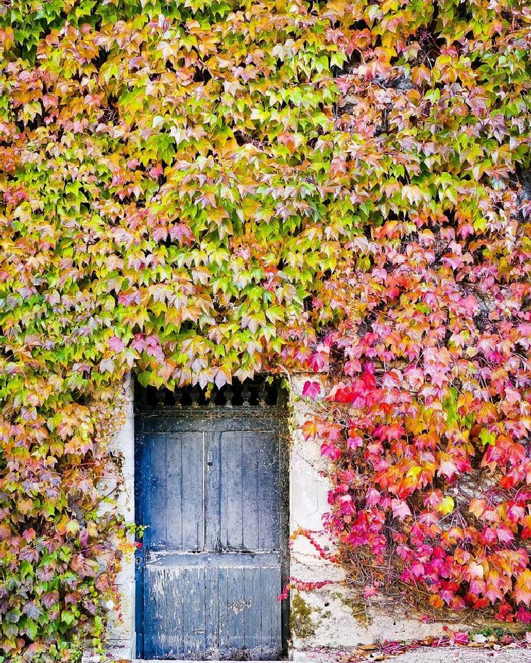 Vivid autumn color of leaves and climbing vines on old French country building with rustic blue doors - @In_I_photographie. #fallleaves #frenchcountry #rusticfrench #rusticdoors #autumninspo #fallinfrance #frenchhouseexterior
