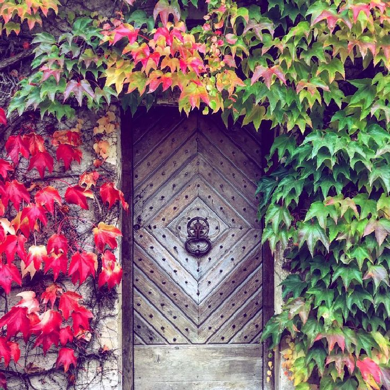 Vivid autumn colorful leaves surrounding a grand rustic French door in Doremy, France - @cassieberubeart. #fallcolor #frenchcountry #frenchfarmhouse #colorfulleaves #climbingvines #rusticdoor #frenchcountryside #autumnfeels #franceinfall