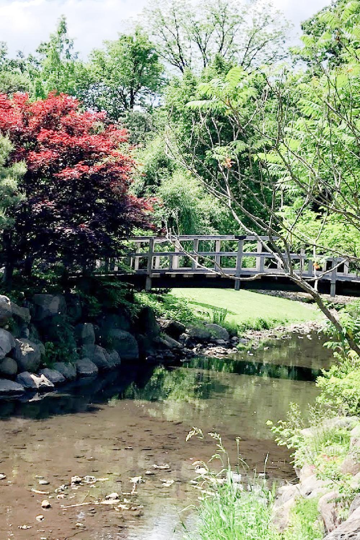 Bridge over a pond in a Japanese garden - Hello Lovely Studio.