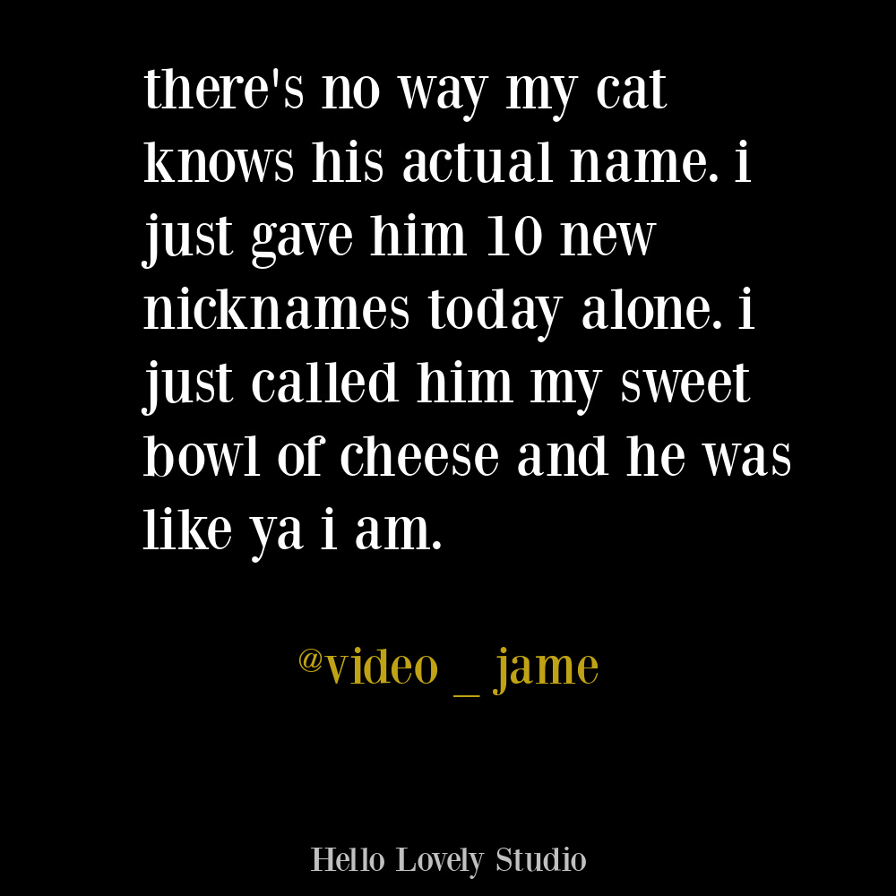 Cat humor on Hello Lovely. #funnytweets #cattweets #cathumor #funnyquotes